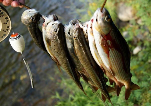 рыбалка в туве на хариуса